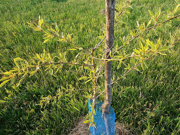 Деревья в подарок