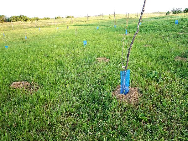 Дерево в подарок 2