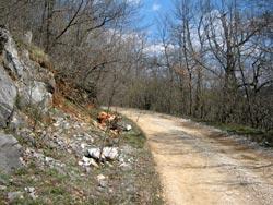 охота в Болгарии