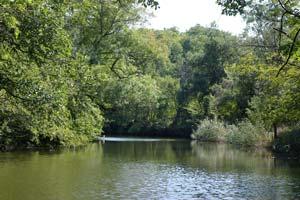 Заповедник Ропотамо, река, природа Болгарии, отдых