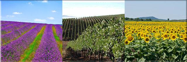 Виноградарство в Болгарии