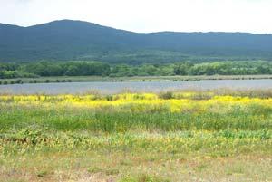 Странджа, национальный парк, природа Болгарии, отдых в Болгарии