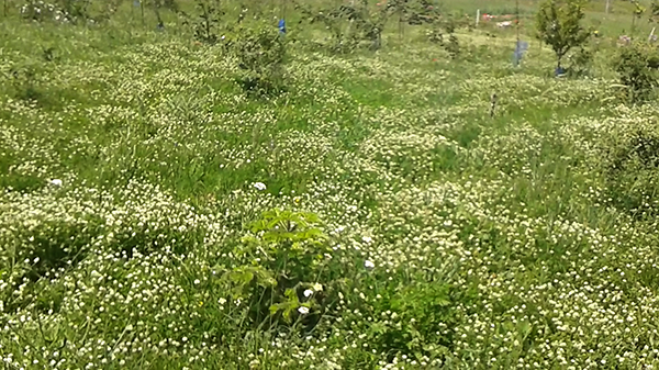 Травяной покров
