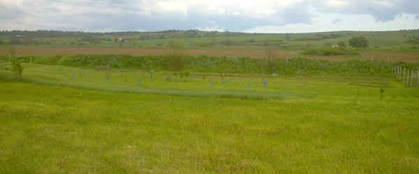 эко поместье в Болгарии