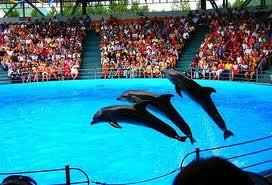 Варна дельфинарий