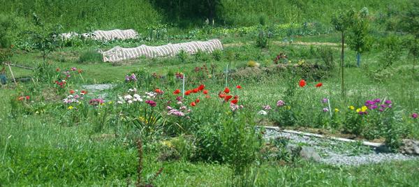 Природный сад и огород в мае