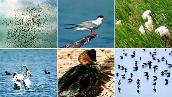 птицы Болгарии, наблюдение за птицами