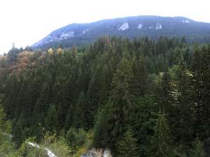 горный лес, Родопи, дорога на Чудные мосты